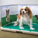 Piddle Place™ Pet Potty Bio+ Turf Treatment