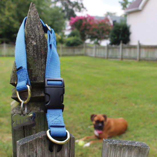KeepSafe® Collar