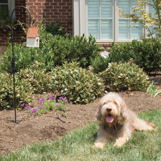 Petsafe Outdoor Bark Control Dog Training System