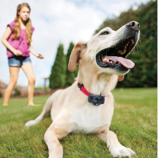 Basic In-Ground Fence™ 2-Dog Bundle