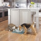 Drinkwell® Sedona Pet Fountain