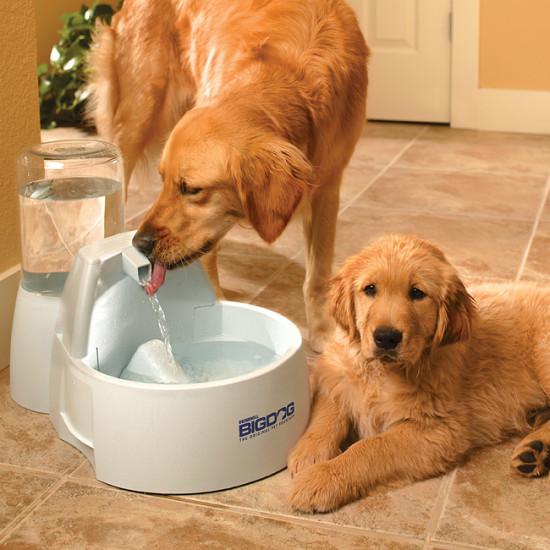 Drinkwell® Big Dog Fountain