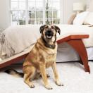 CozyUp™ Bed Ramp