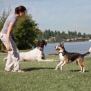 Little Dog Elite Trainer Add-A-Dog® Collar