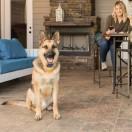 Smart Dog® Remote Trainer