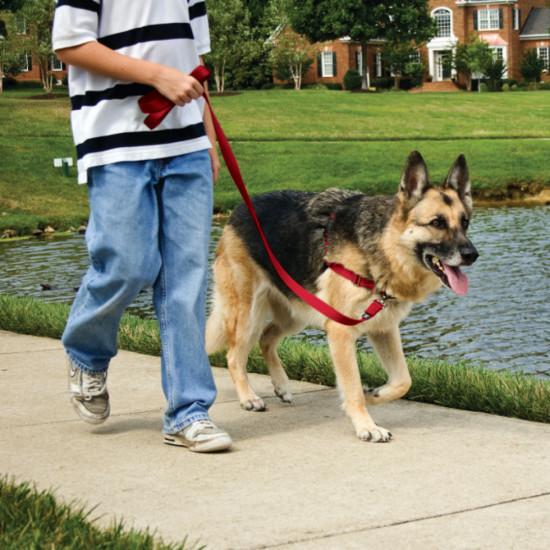 Easy Walk Harness By Petsafe Grp Ewh
