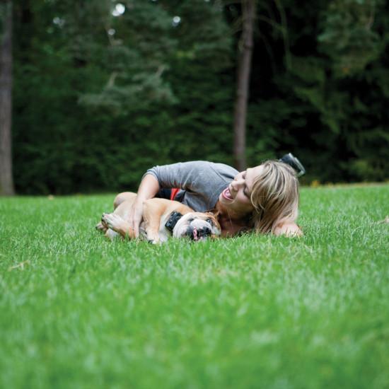 Petsafe Little Dog Remote Trainer Amazon