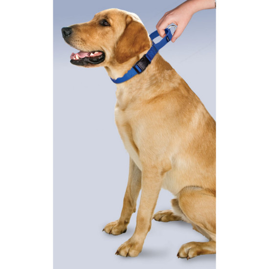 Martingale Collars With Quick Snap Buckle By Petsafe Grp Pqc