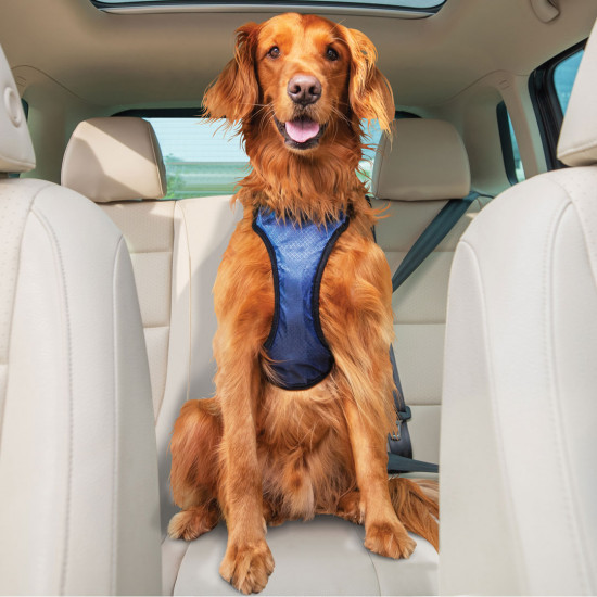 Happy Ride™ Safety Harness