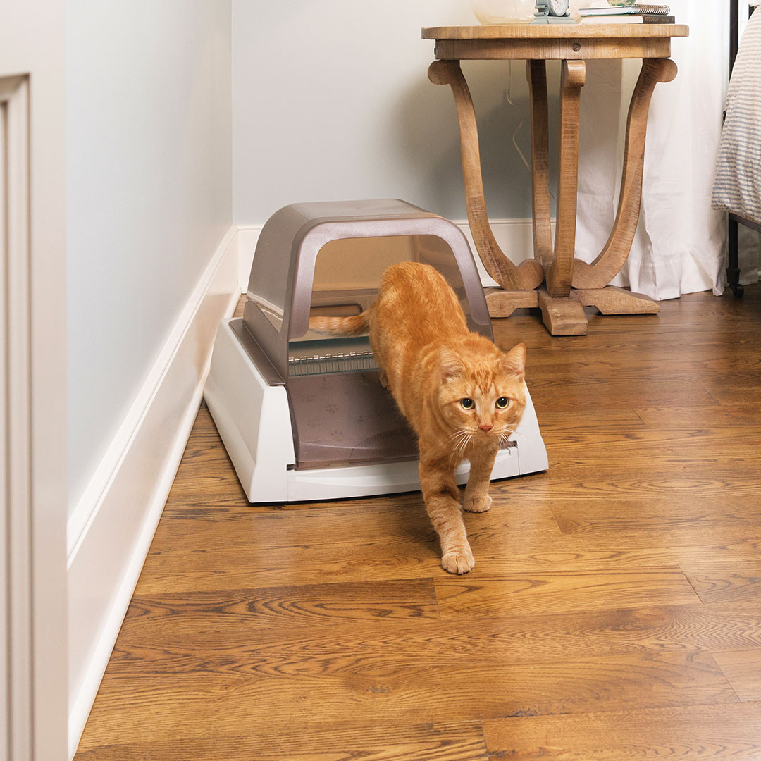 Automatic Self-Cleaning Litter Box that stays fresh and clean