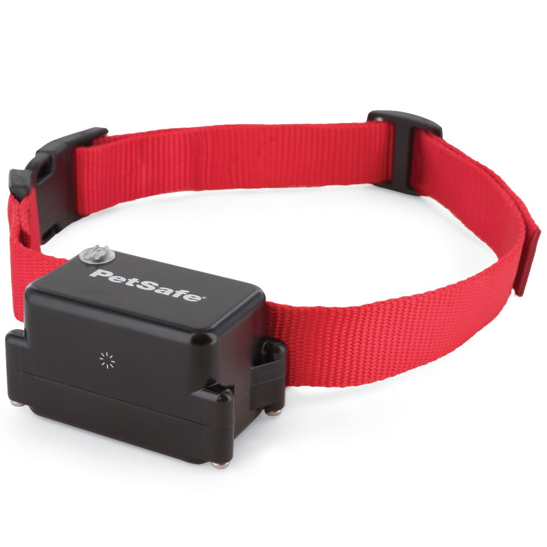 How To Train Your Dog With An E Collar
